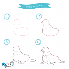Animal Drawing Tutorial
