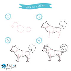 Husky Drawing Tutorial