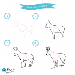 Draw Me The Mountain Animals Kids Tutorials