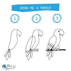 Parrot Drawing Tutorial